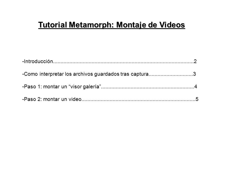 Tutorial Metamorph: Montaje de Videos -Introducción...............................................................................................2 -Como interpretar los archivos guardados tras captura..............................3 -Paso 1: montar un visor galería...............................................................4 -Paso 2: montar un video.............................................................................5