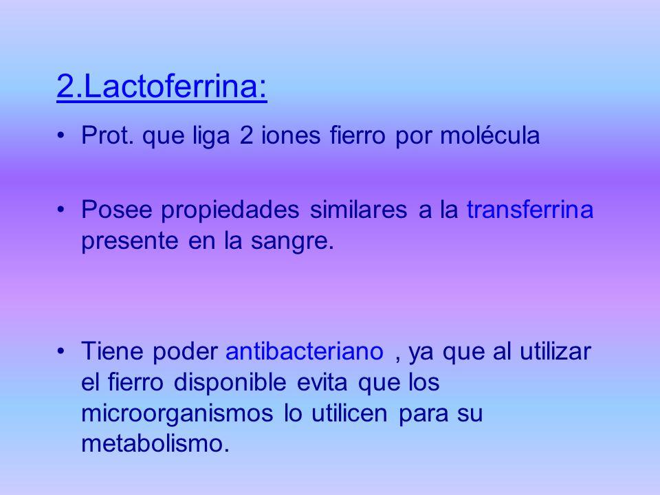 2.Lactoferrina: Prot. que liga 2 iones fierro por molécula Posee propiedades similares a la transferrina presente en la sangre. Tiene poder antibacter