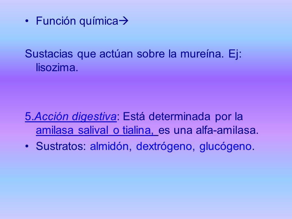 Función química Sustacias que actúan sobre la mureína. Ej: lisozima. 5.Acción digestiva: Está determinada por la amilasa salival o tialina, es una alf