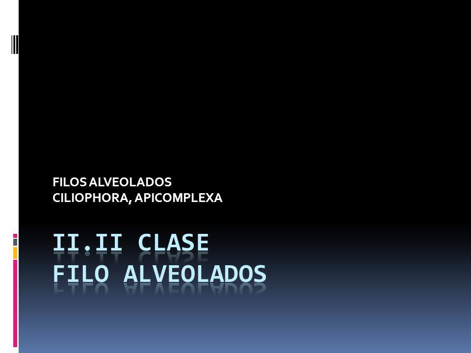 FILOS ALVEOLADOS CILIOPHORA, APICOMPLEXA