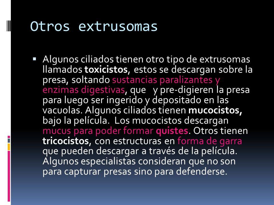 Otros extrusomas Algunos ciliados tienen otro tipo de extrusomas llamados toxicistos, estos se descargan sobre la presa, soltando sustancias paralizantes y enzimas digestivas, que y pre-digieren la presa para luego ser ingerido y depositado en las vacuolas.