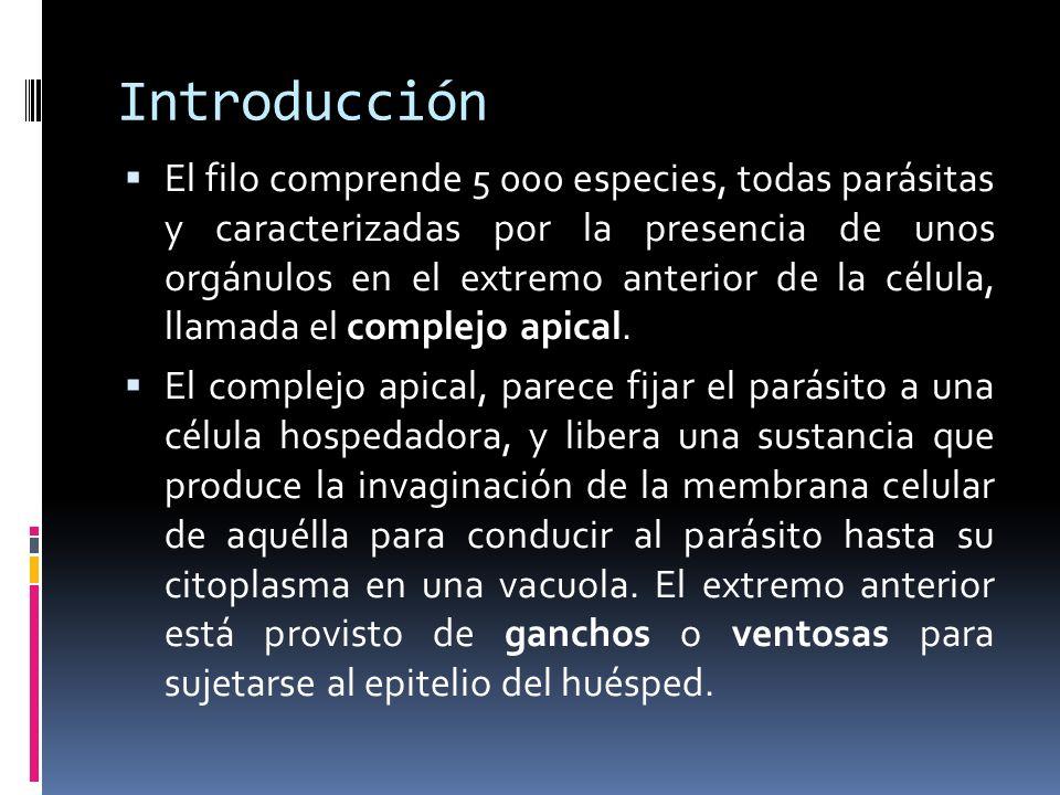 Introducción El filo comprende 5 000 especies, todas parásitas y caracterizadas por la presencia de unos orgánulos en el extremo anterior de la célula, llamada el complejo apical.