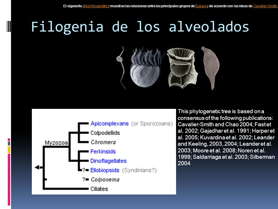 Filogenia de los alveolados This phylogenetic tree is based on a consensus of the following publications: Cavalier-Smith and Chao 2004; Fast et al.