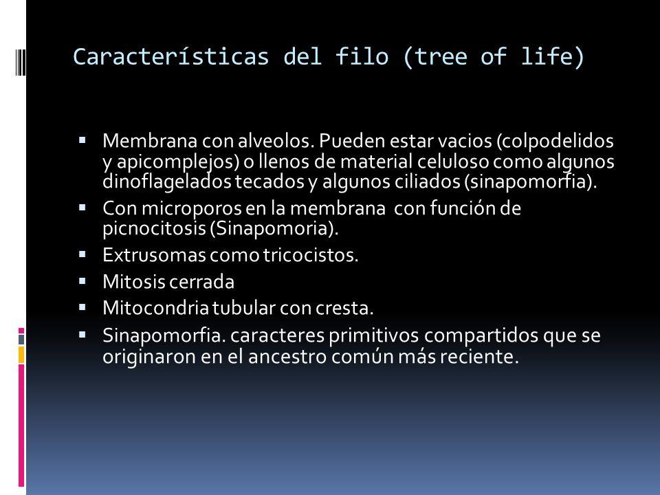 Características del filo (tree of life) Membrana con alveolos.
