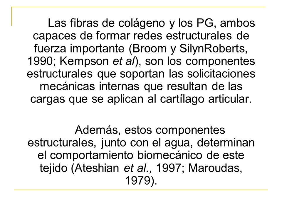 Las fibras de colágeno y los PG, ambos capaces de formar redes estructurales de fuerza importante (Broom y SilynRoberts, 1990; Kempson et al), son lo