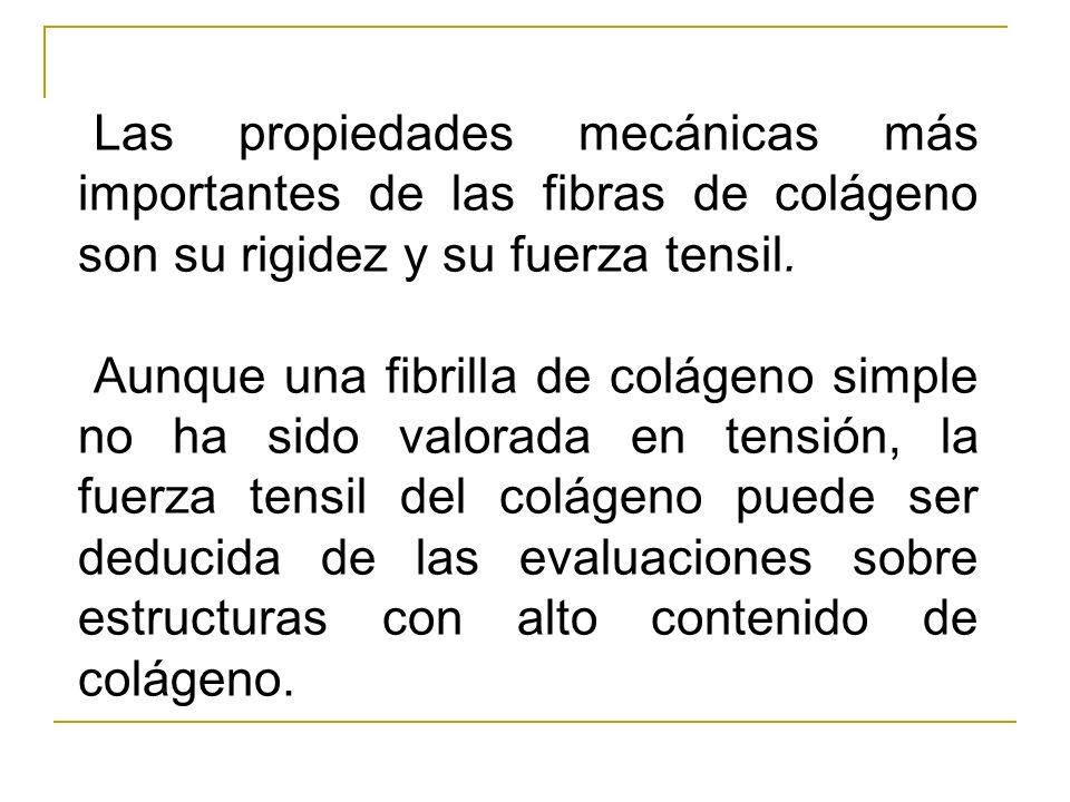 Las propiedades mecánicas más importantes de las fibras de colágeno son su rigidez y su fuerza tensil. Aunque una fibrilla de colágeno simple no ha si