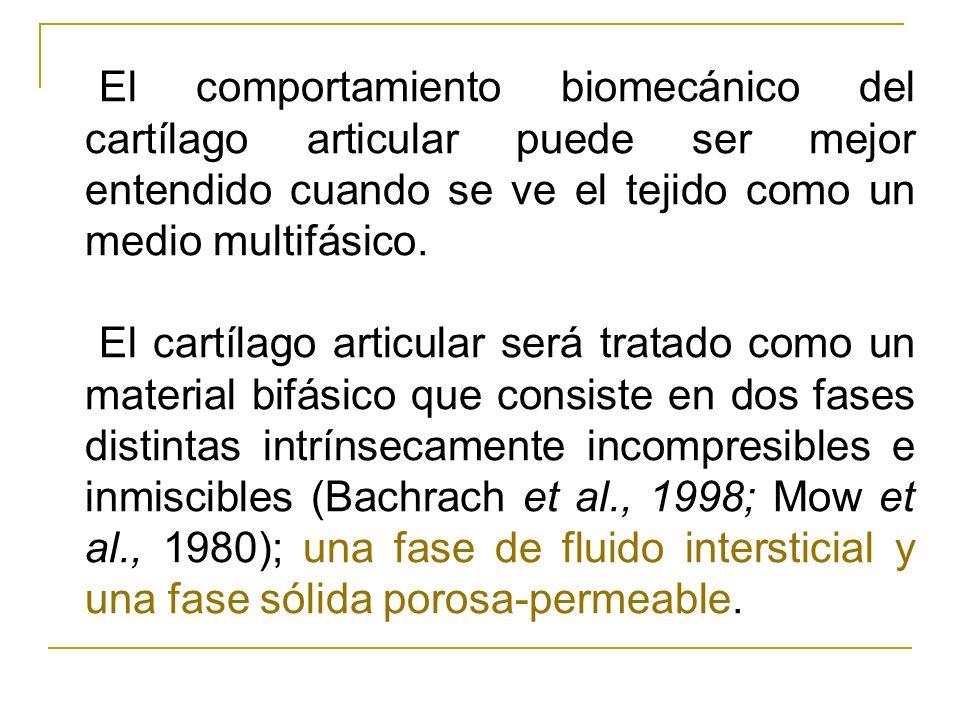 El comportamiento biomecánico del cartílago articular puede ser mejor entendido cuando se ve el tejido como un medio multifásico. El cartílago articul
