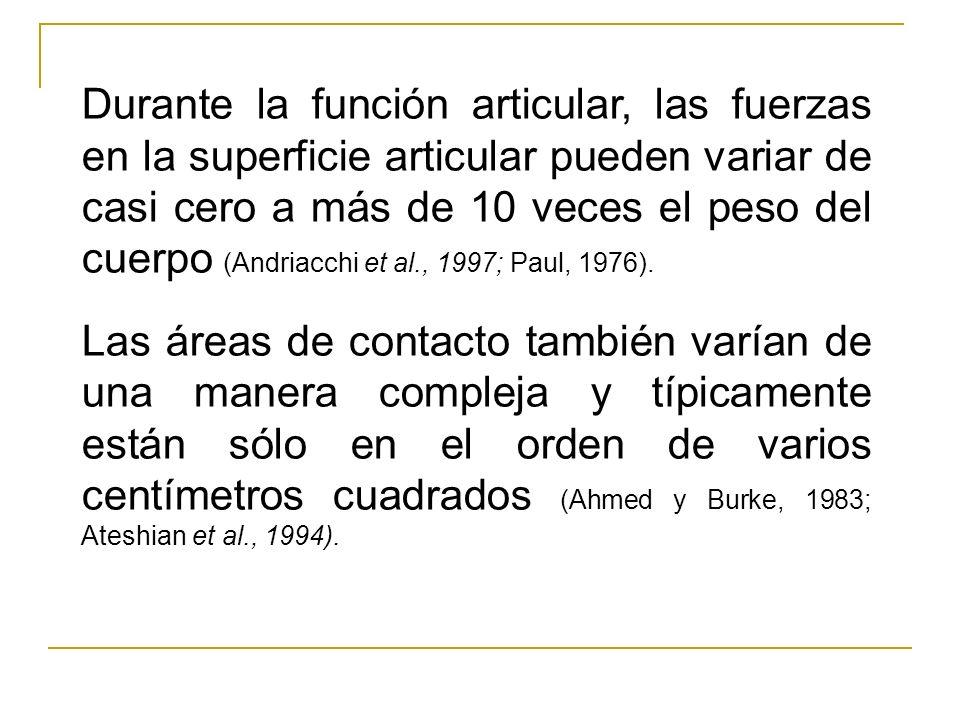Durante la función articular, las fuerzas en la superficie articular pueden variar de casi cero a más de 10 veces el peso del cuerpo (Andriacchi et al