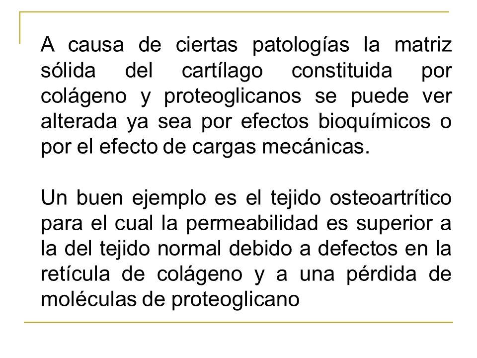 A causa de ciertas patologías la matriz sólida del cartílago constituida por colágeno y proteoglicanos se puede ver alterada ya sea por efectos bioquí