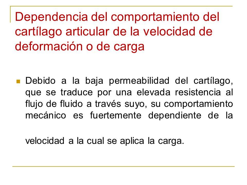 Dependencia del comportamiento del cartílago articular de la velocidad de deformación o de carga Debido a la baja permeabilidad del cartílago, que se
