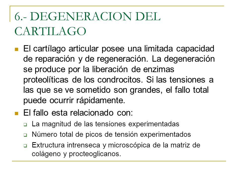6.- DEGENERACION DEL CARTILAGO El cartílago articular posee una limitada capacidad de reparación y de regeneración. La degeneración se produce por la