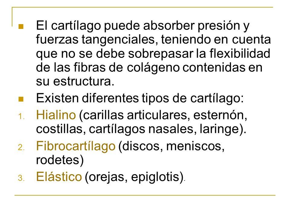 El cartílago puede absorber presión y fuerzas tangenciales, teniendo en cuenta que no se debe sobrepasar la flexibilidad de las fibras de colágeno con