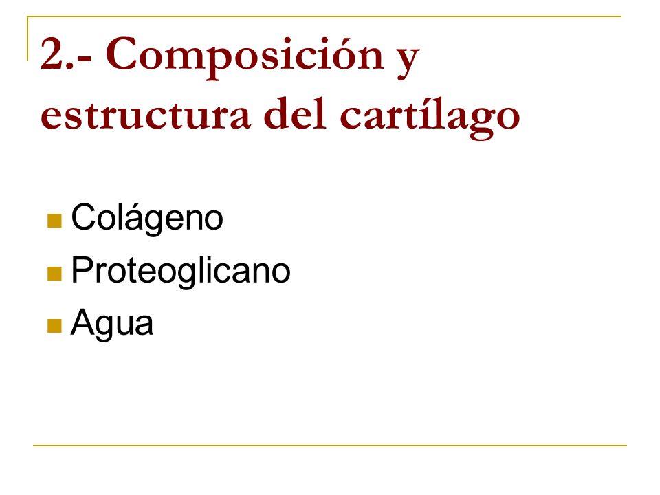 Los condrocitos, las células escasamente distribuidas en el cartilago articular, proporcionan menos del.