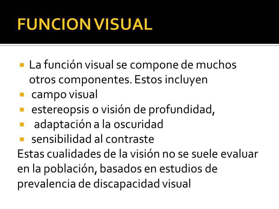 La función visual se compone de muchos otros componentes. Estos incluyen campo visual estereopsis o visión de profundidad, adaptación a la oscuridad s