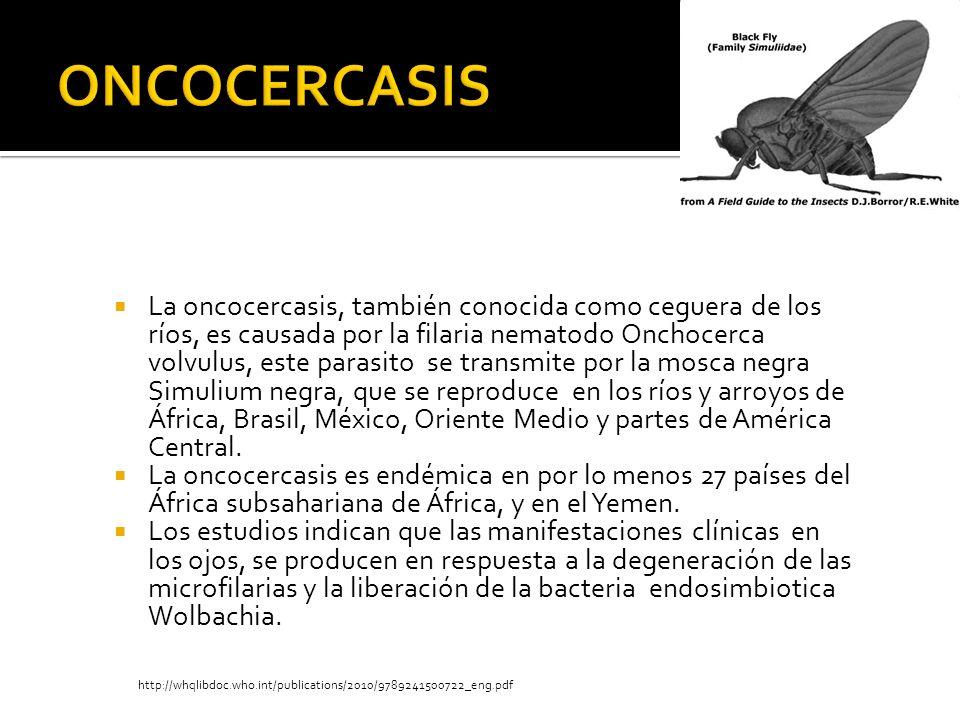 La oncocercasis, también conocida como ceguera de los ríos, es causada por la filaria nematodo Onchocerca volvulus, este parasito se transmite por la