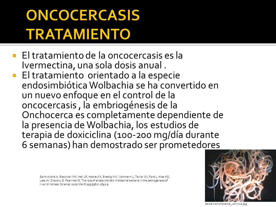 El tratamiento de la oncocercasis es la Ivermectina, una sola dosis anual. El tratamiento orientado a la especie endosimbiótica Wolbachia se ha conver