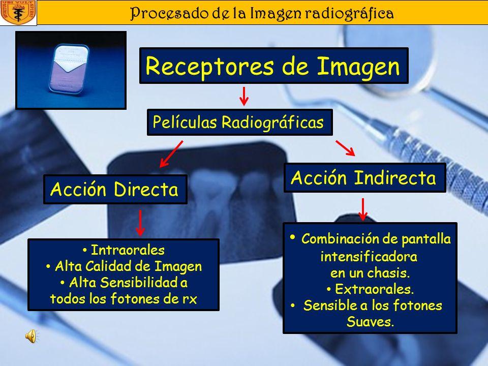 Procesado de la Imagen radiográfica Receptores de Imagen Acción Directa Acción Indirecta Intraorales Alta Calidad de Imagen Alta Sensibilidad a todos los fotones de rx Combinación de pantalla intensificadora en un chasis.
