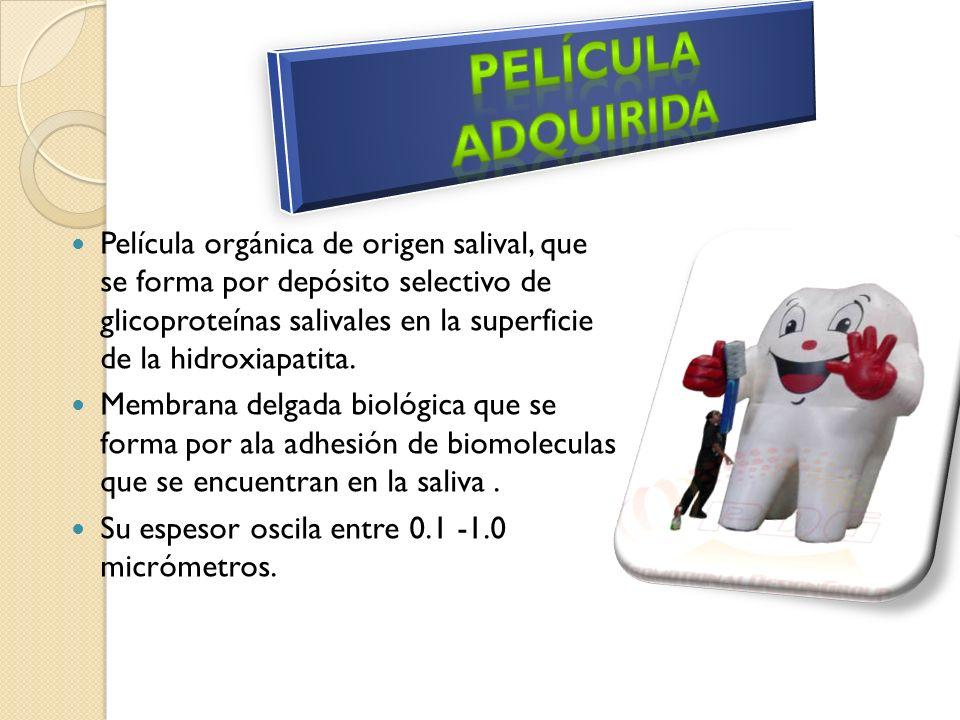 Formación de la placa 0-1hora : Aparece de repente la película adquirida : proteínas acidas, glucoproteinas,sulfatado IGA,IGG, albumina.