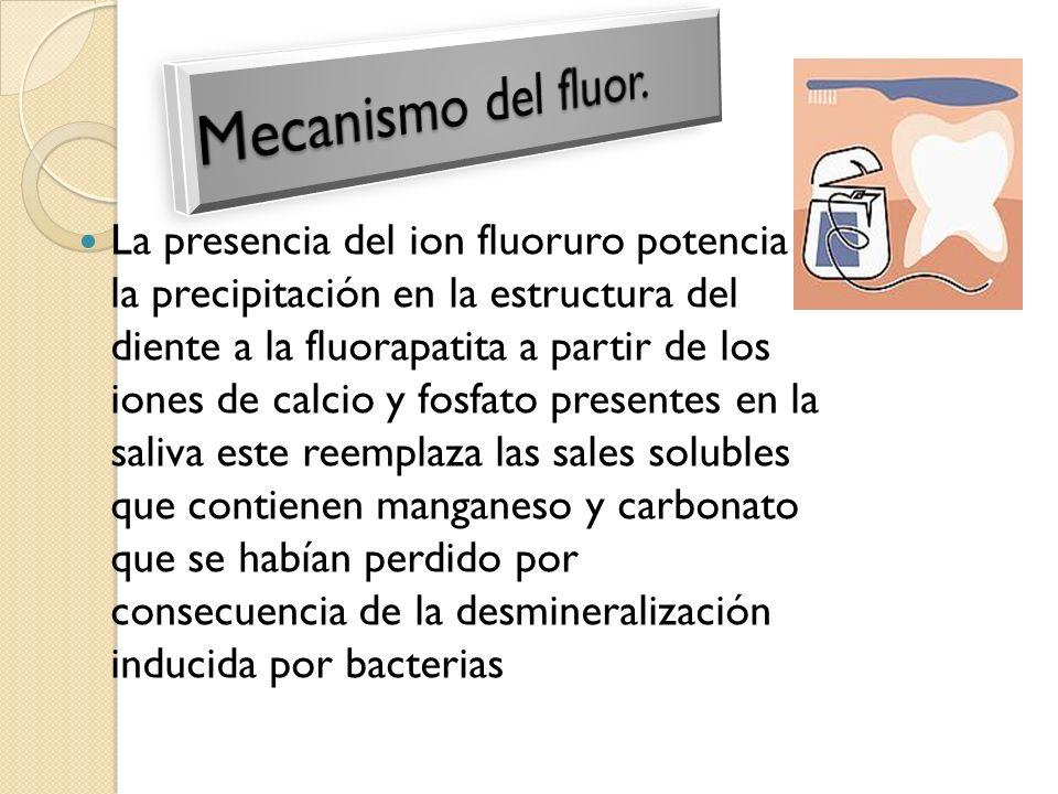 La presencia del ion fluoruro potencia la precipitación en la estructura del diente a la fluorapatita a partir de los iones de calcio y fosfato presen