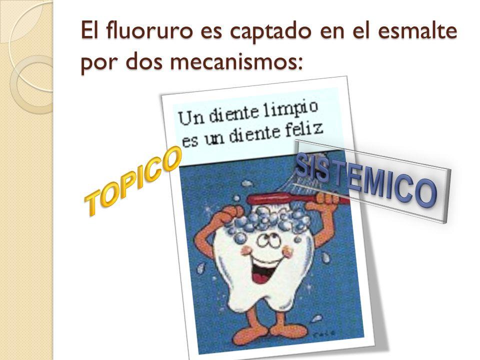 El fluoruro es captado en el esmalte por dos mecanismos: