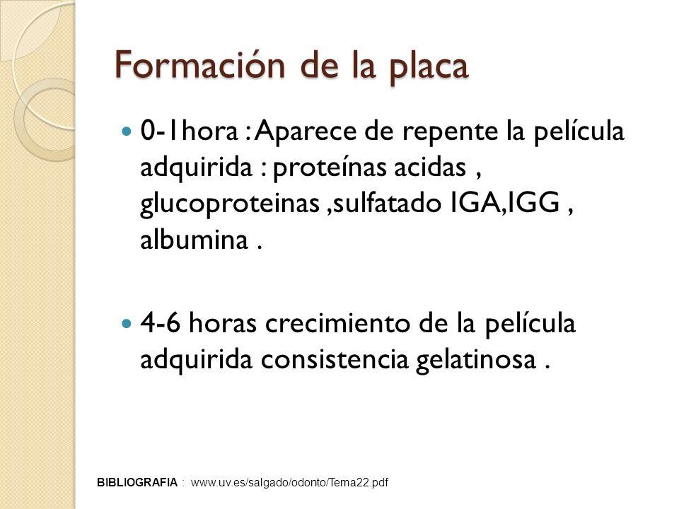 Formación de la placa 0-1hora : Aparece de repente la película adquirida : proteínas acidas, glucoproteinas,sulfatado IGA,IGG, albumina. 4-6 horas cre