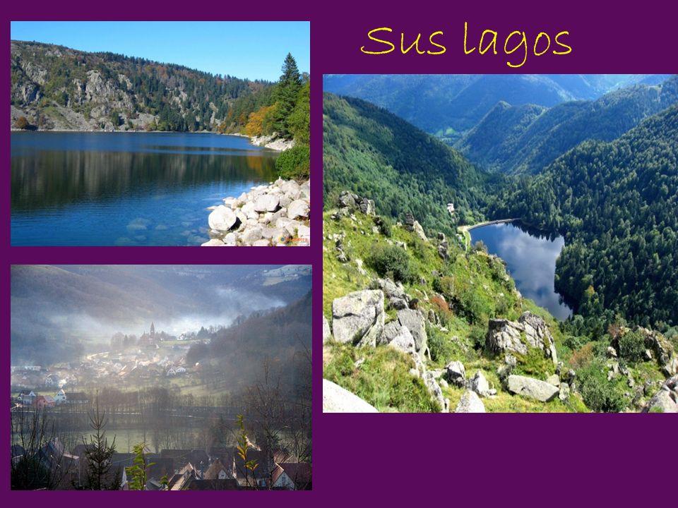 Sus lagos