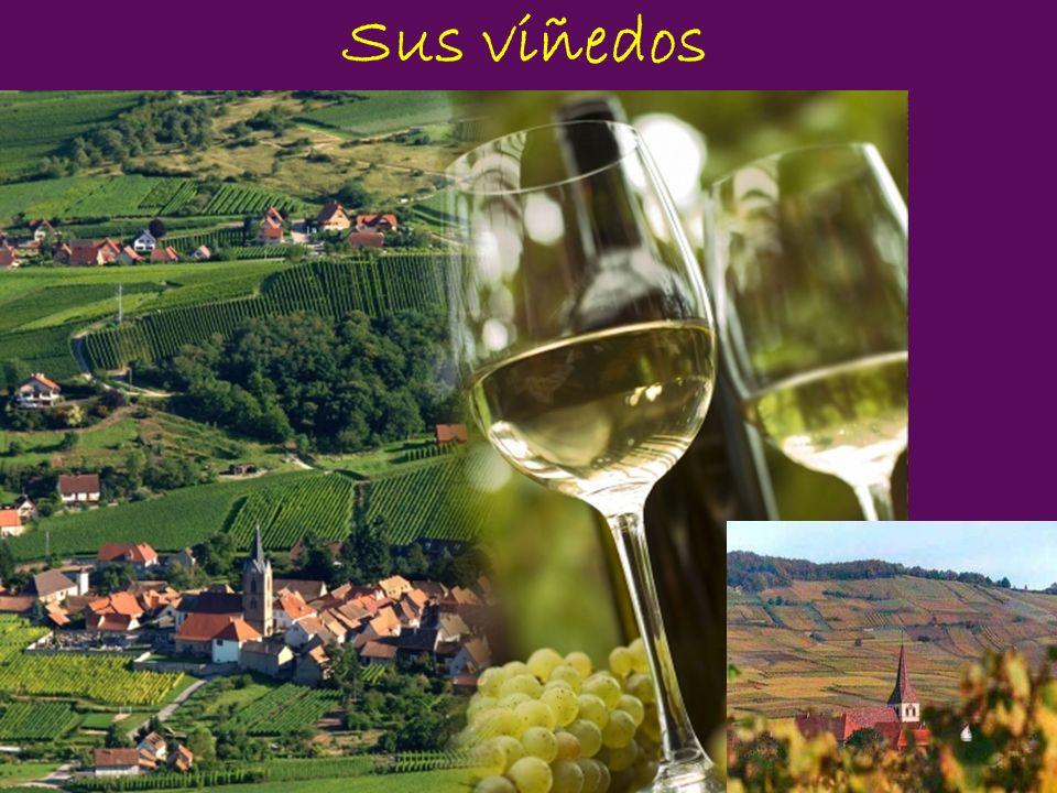 Sus viñedos