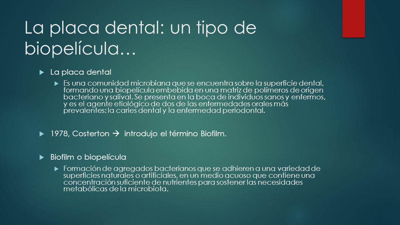 La placa dental: un tipo de biopelícula… La placa dental Es una comunidad microbiana que se encuentra sobre la superficie dental, formando una biopelícula embebida en una matriz de polímeros de origen bacteriano y salival.