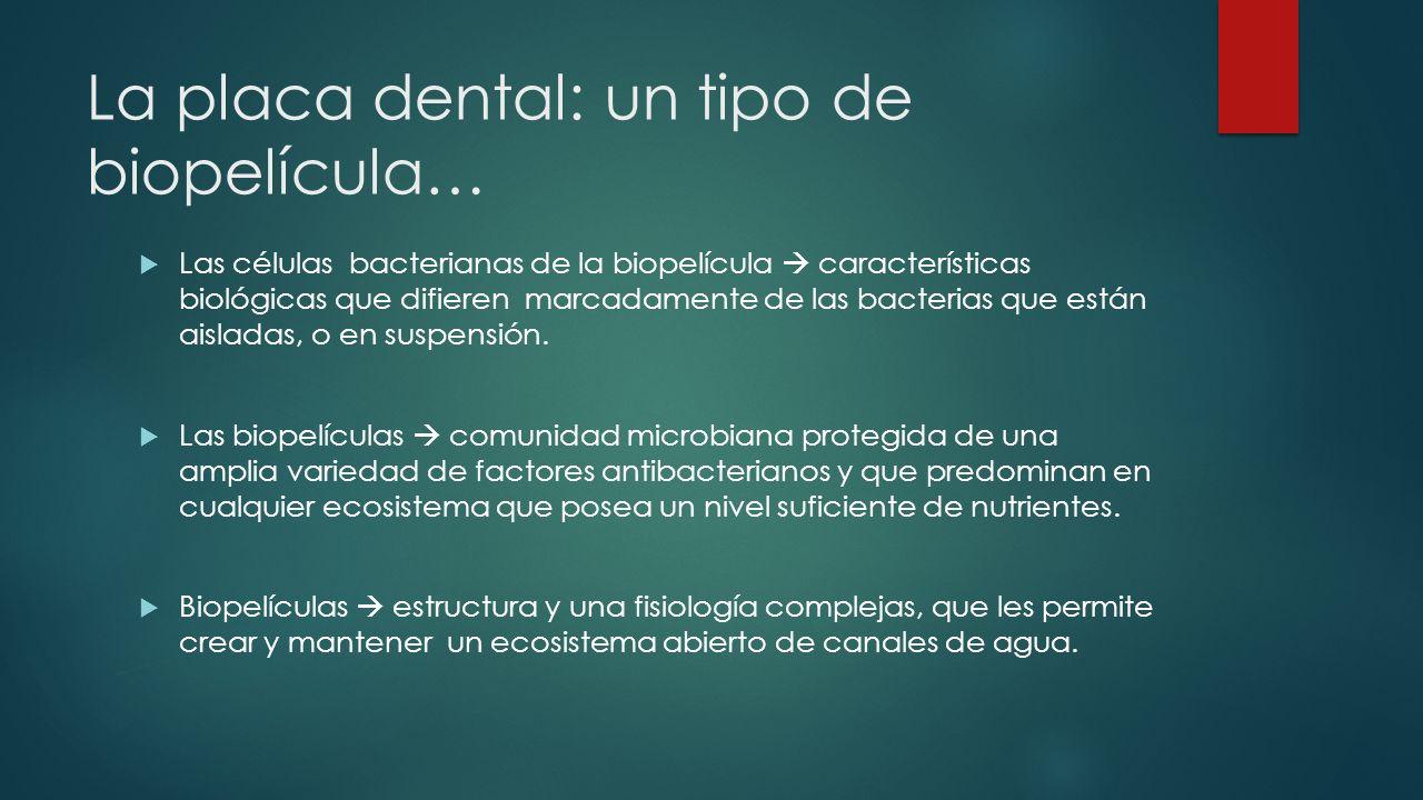 La placa dental: un tipo de biopelícula… Las células bacterianas de la biopelícula características biológicas que difieren marcadamente de las bacterias que están aisladas, o en suspensión.