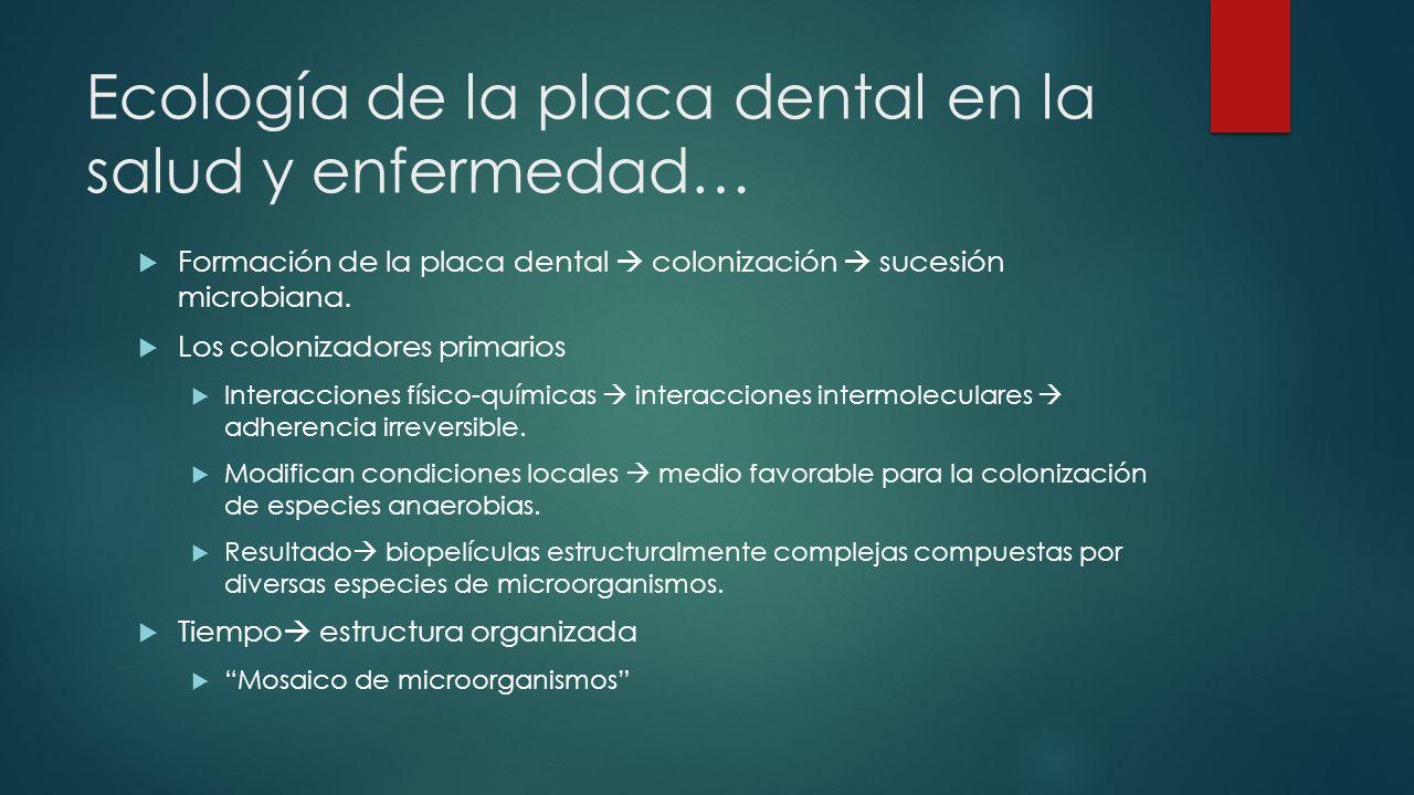 Ecología de la placa dental en la salud y enfermedad… Formación de la placa dental colonización sucesión microbiana.