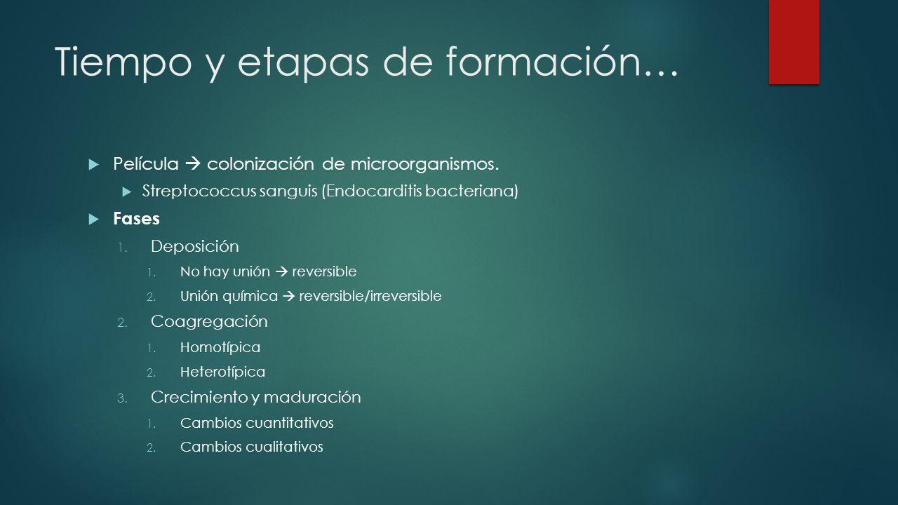 Tiempo y etapas de formación… Película colonización de microorganismos.