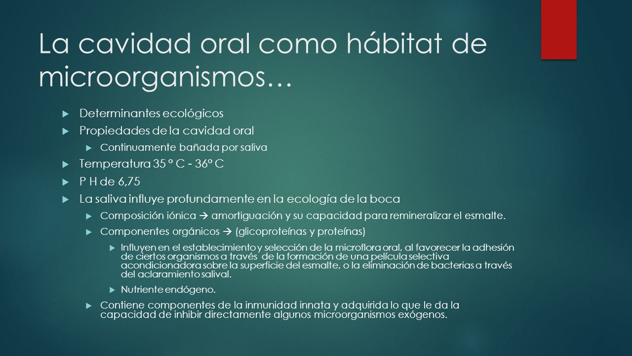 La cavidad oral como hábitat de microorganismos… Determinantes ecológicos Propiedades de la cavidad oral Continuamente bañada por saliva Temperatura 35 ° C - 36° C P H de 6,75 La saliva influye profundamente en la ecología de la boca Composición iónica amortiguación y su capacidad para remineralizar el esmalte.