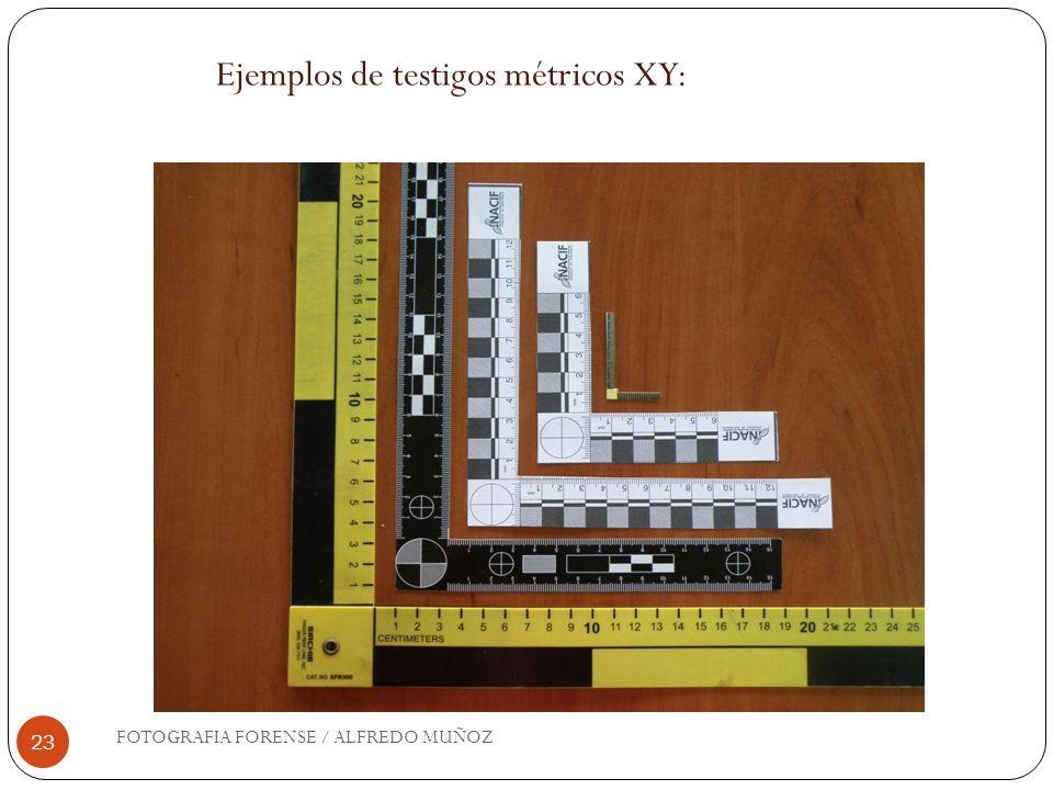 23 Ejemplos de testigos métricos XY: FOTOGRAFIA FORENSE / ALFREDO MUÑOZ