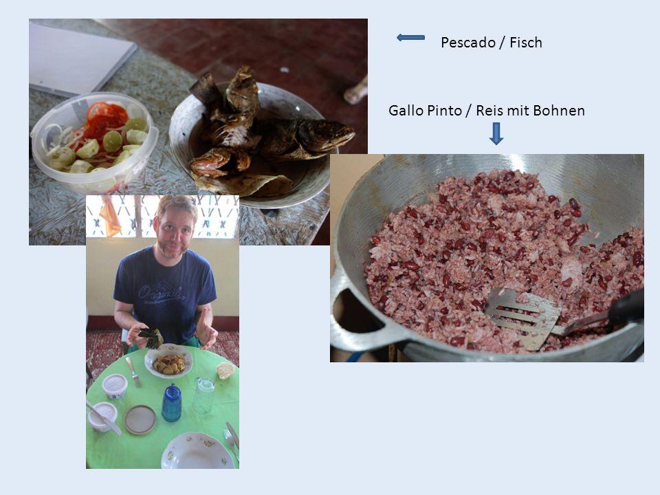 Pescado / Fisch Gallo Pinto / Reis mit Bohnen