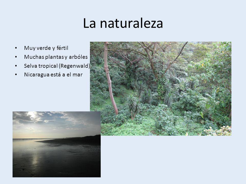 La naturaleza Muy verde y fértil Muchas plantas y arbóles Selva tropical (Regenwald) Nicaragua está a el mar