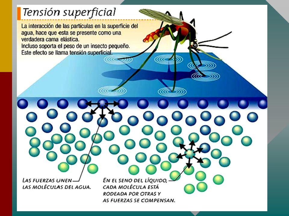 TENSION SUPERFICIAL El fenómeno de tensión superficial también ha sido observado en la formación de gotas de agua en las hojas de una planta como se muestra en la figura a, así mismo gracias a éste fenómeno los insectos acuáticos pueden caminar sobre la superficie libre del agua como lo muestra la figura