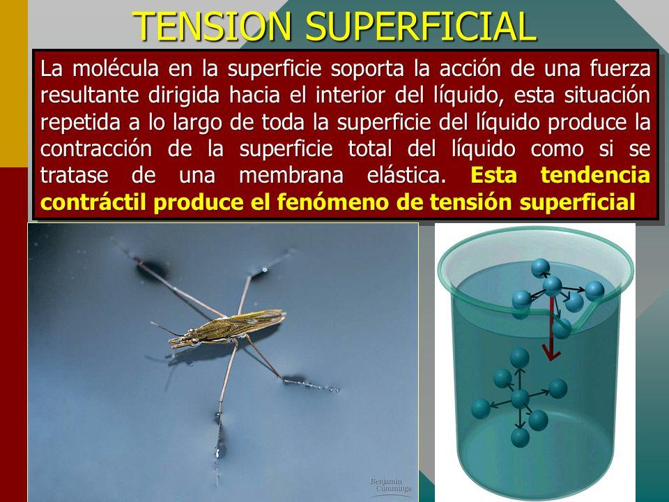 TENSION SUPERFICIAL Estos fenómenos muestran la existencia de una superficie límite entre un líquido y otra sustancia. Es decir la superficie de un lí