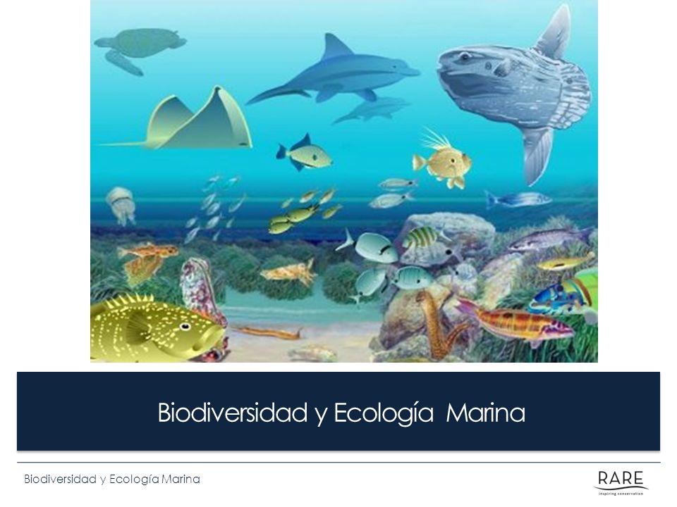 Biodiversidad y Ecología Marina Tipos de seres vivos PRODUCTORES: fabrican su propia materia orgánica CONSUMIDORES: se alimentan de otros seres vivos LOS DESCOMPONEDORES: se nutren descomponiendo la materia orgánica