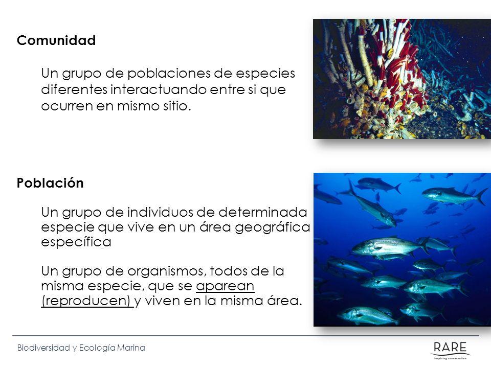 Biodiversidad y Ecología Marina Comunidad Un grupo de poblaciones de especies diferentes interactuando entre si que ocurren en mismo sitio. Población