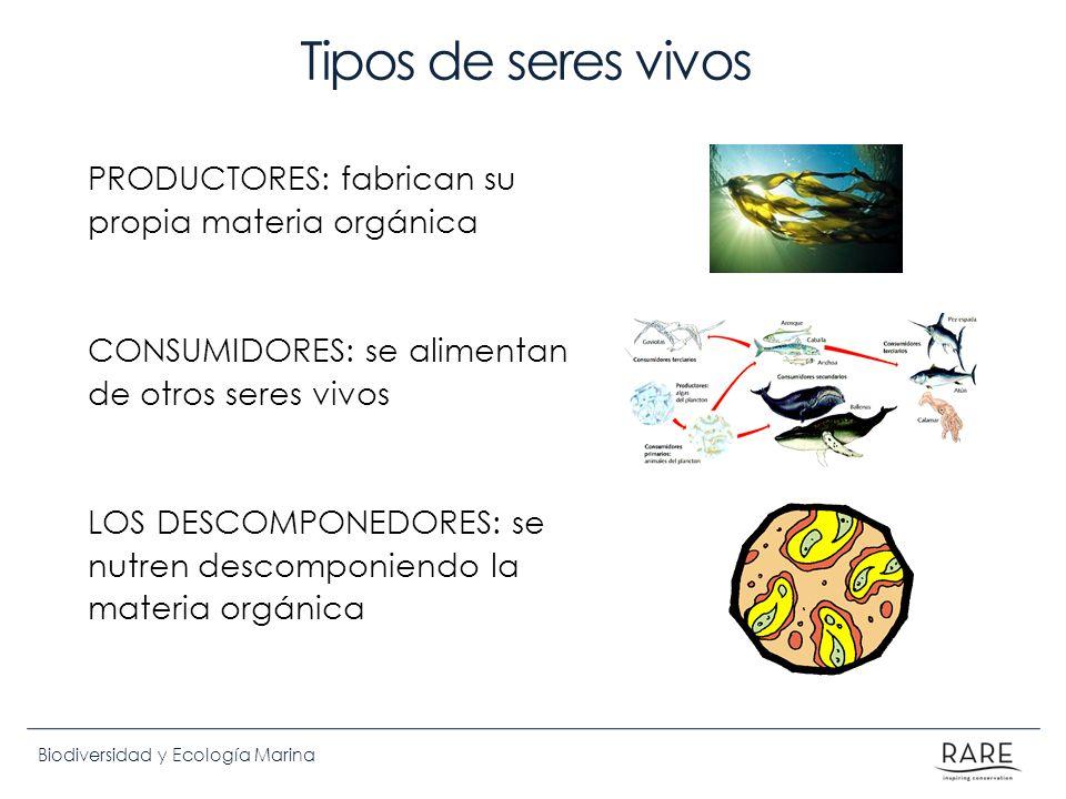 Biodiversidad y Ecología Marina Tipos de seres vivos PRODUCTORES: fabrican su propia materia orgánica CONSUMIDORES: se alimentan de otros seres vivos