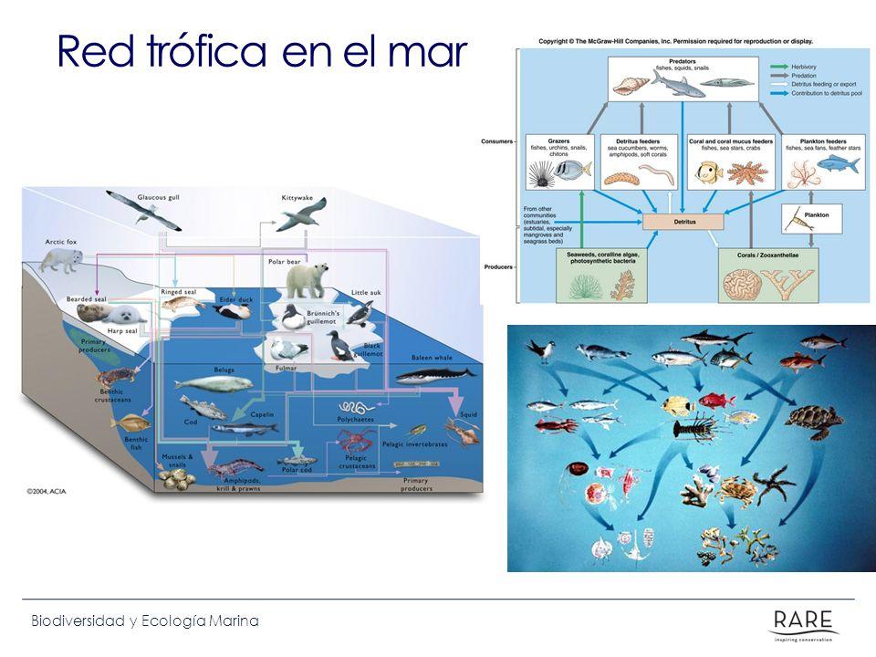 Biodiversidad y Ecología Marina Red trófica en el mar