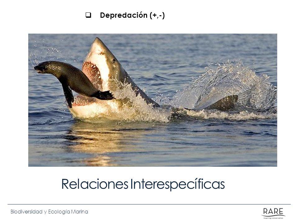 Biodiversidad y Ecología Marina Relaciones Interespecíficas Depredación (+,-)