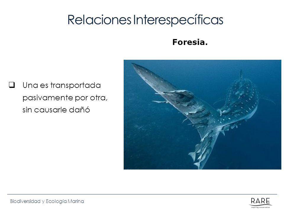 Biodiversidad y Ecología Marina Relaciones Interespecíficas Una es transportada pasivamente por otra, sin causarle dañó Foresia.