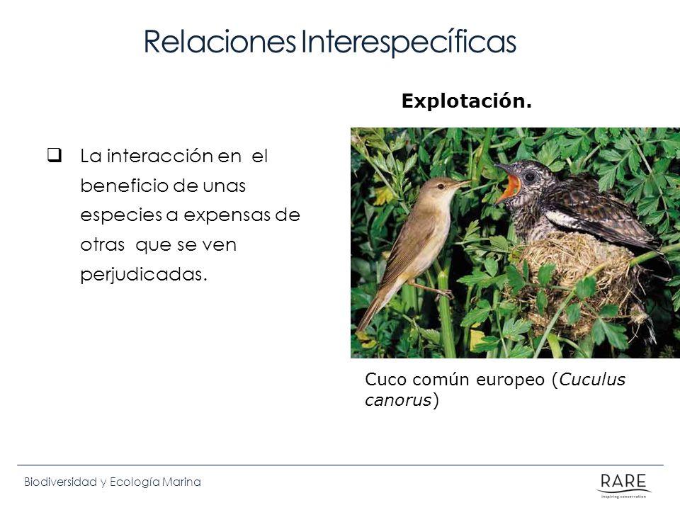 Biodiversidad y Ecología Marina Relaciones Interespecíficas La interacción en el beneficio de unas especies a expensas de otras que se ven perjudicada
