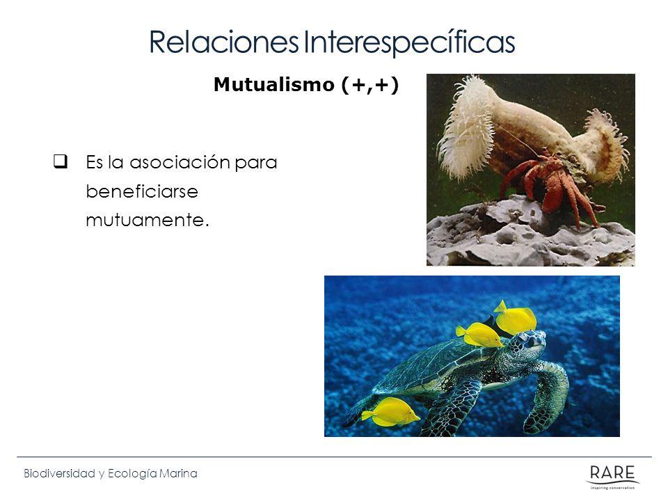 Biodiversidad y Ecología Marina Relaciones Interespecíficas Es la asociación para beneficiarse mutuamente. Mutualismo (+,+)