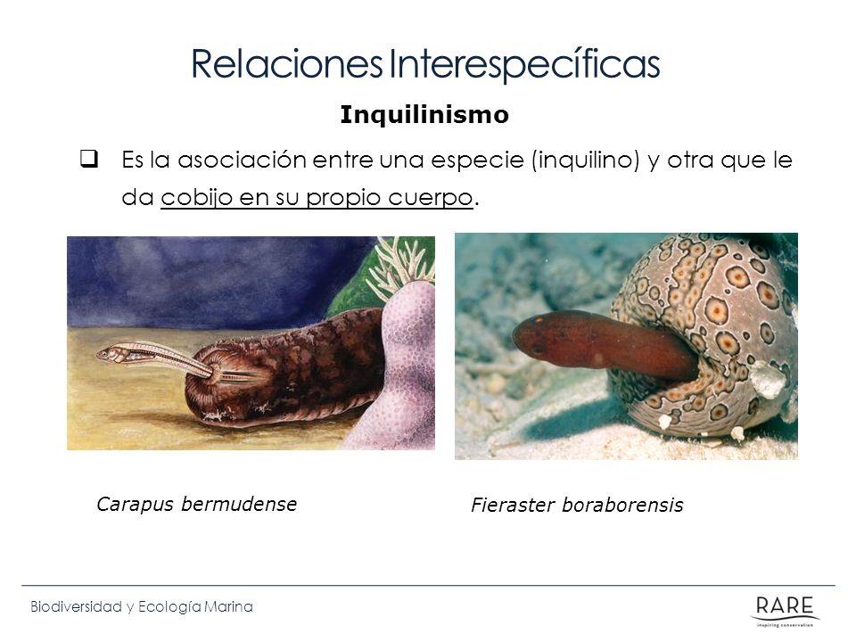 Biodiversidad y Ecología Marina Relaciones Interespecíficas Es la asociación entre una especie (inquilino) y otra que le da cobijo en su propio cuerpo