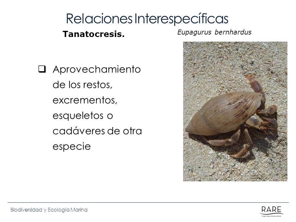 Biodiversidad y Ecología Marina Relaciones Interespecíficas Aprovechamiento de los restos, excrementos, esqueletos o cadáveres de otra especie Tanatoc