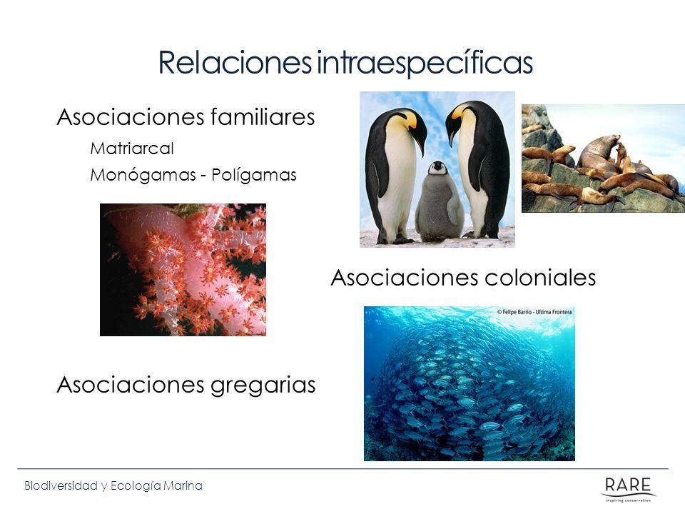 Biodiversidad y Ecología Marina Relaciones intraespecíficas Asociaciones familiares Matriarcal Monógamas - Polígamas Asociaciones coloniales Asociacio