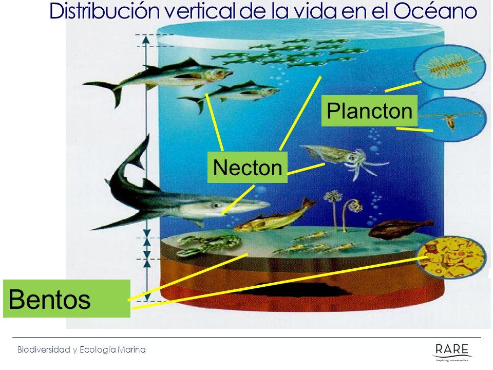 Biodiversidad y Ecología Marina Necton Bentos Distribución vertical de la vida en el Océano Plancton
