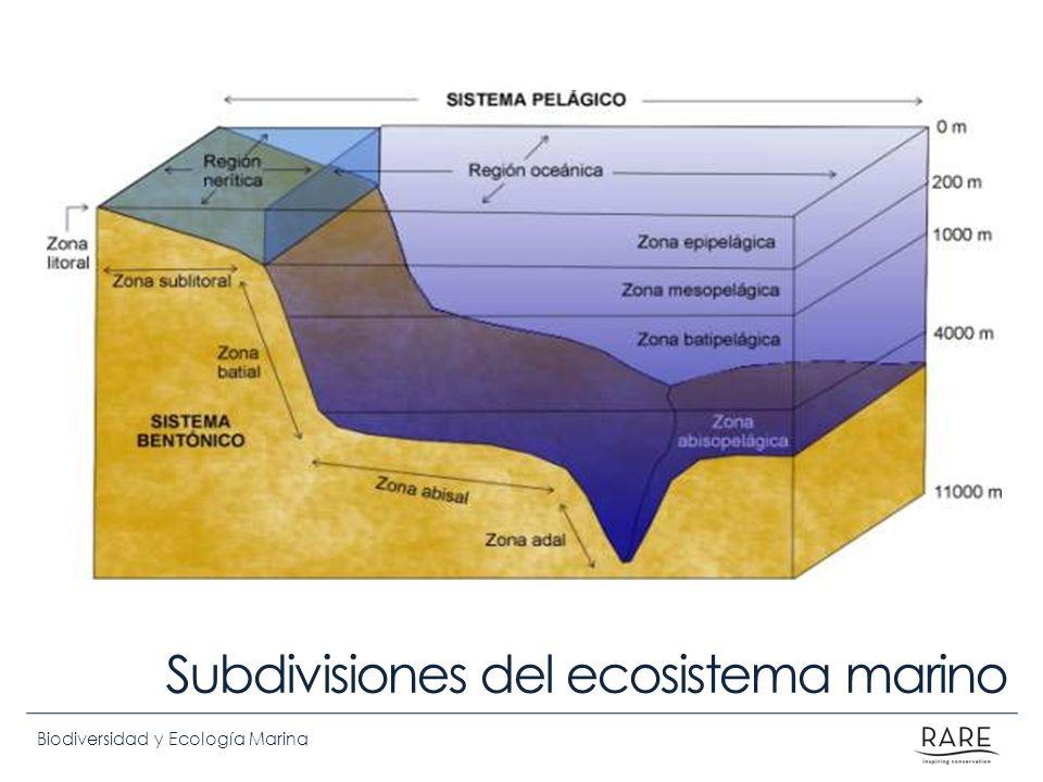Biodiversidad y Ecología Marina Subdivisiones del ecosistema marino